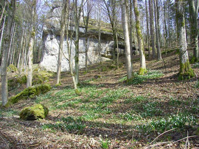Bild - Märzenbecher mit Fels im Paradiestal